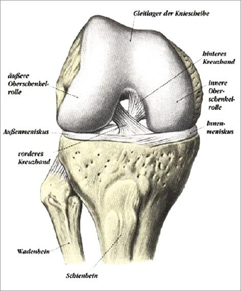 Kniegelenk – OP-Zentrum | Orthopädie | Chirurgie